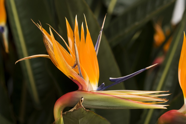 andobirdofparadise